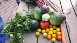 thanksgiving_garden_bounty